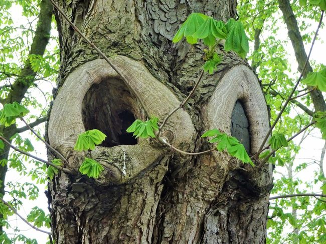 Bark Branch Day Focus On Foreground Green Color Growth Hole Leaf Low Angle View Nature No People Outdoors Plant Plant Bark Plant Part Rough Textured  Tree Tree Trunk Trunk