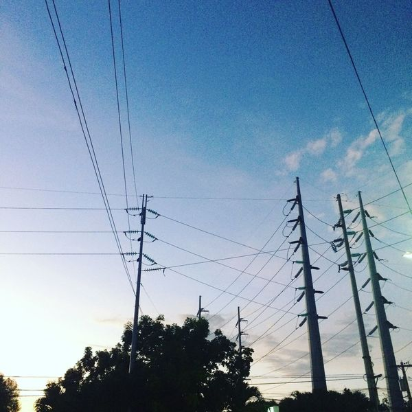 Sky Low Angle View Cable Tree Plant Nature Power Line