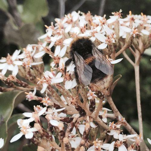 Rangitoto Island Summit Bees Summer Newzealand