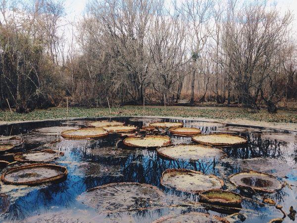 Exploring new places. Gainesville Liveauthentic Vscocam VSCO Landscape Photography Exploring