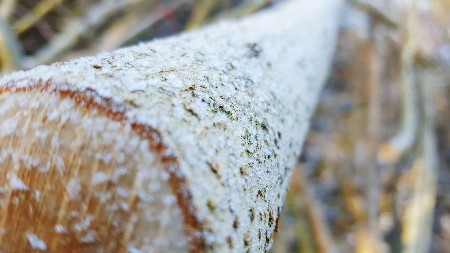 snow Winter Nature Outdoors Nature_collection EyeEm Nature Lover Snow Walking Around Selective Focus Cold Tadaa Community -F3