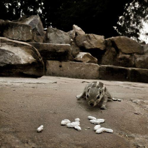 Squirrel Rock -