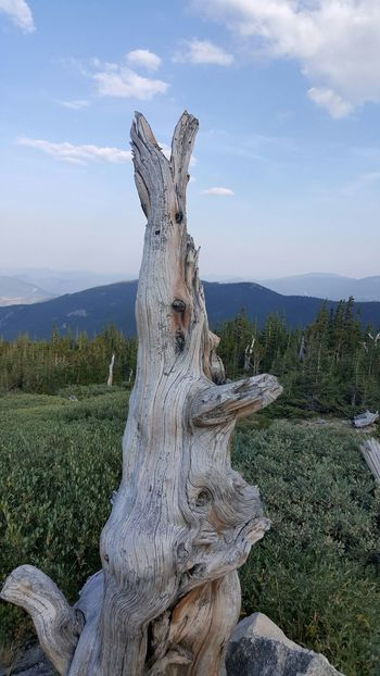 Stump No Filter Mountains Colorado Samsungphotography Samsung Galaxy S6 Edge Nature Check This Out Something Different Cool Getting Creative Getting Inspired Evening Sky Pastel