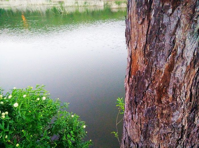 Beauty In Nature Calm Day Grass Green Green Color Growth Idyllic Lake Landscape Nature No People Non Urban Scene Non-urban Scene Outdoors Plant Remote Rippled Scenics Standing Water Tranquil Scene Tranquility Tree Tree Trunk Water