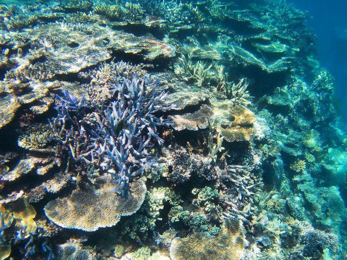 Underwater Sea Life Sea UnderSea Nature Water Coral No People Beauty In Nature Day ~ Greatbarrierreef Cairns, North Queensland, Australia