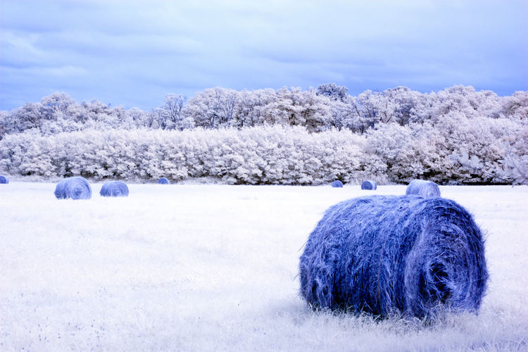 Hay bales on field against sky during winter