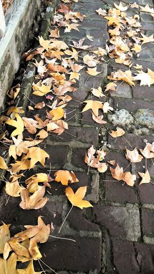 Autumn Colors Streetphotography Wintertime Pict Lovely Day Likeautumn