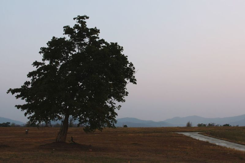 Solitary Solitude Tree Nature Mountains Fall Season Warm Colors Beauty In Nature Outdoors No People in Pai Thailand North Thailand South East Asia