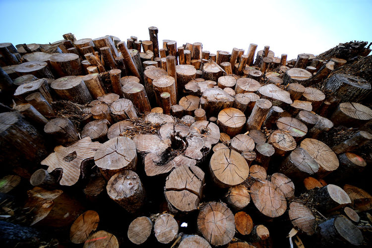 Stack of logs against trees in forest