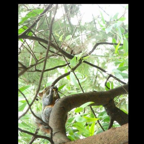 Una hermosa ardilla ebwl Zoologicodechapultepec , fotitos tomadas en el Df y Estadodemexico