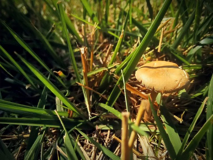 Hongos  Green Grass Bautiful Sunnyday☀️