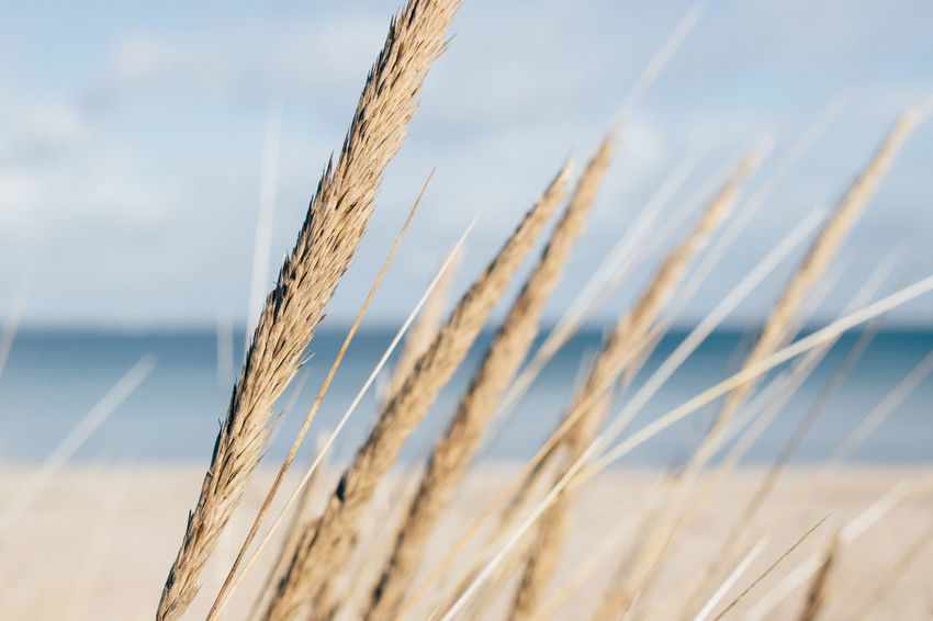 Postcard from the sea. Close-up Detail Environmental Conservation EyeEm Deutschland EyeEm Nature Lover Grass Growth Mood Captures Naturelovers No People Plant Seaside Seaview Selective Focus Straw Showcase March Simplicity