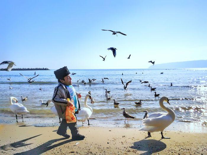 Follow me Swans