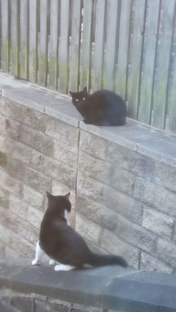 And then was joined by another cat! Alertness Animal Animal Themes Black Color Cat Cats Check This Out Close-up Day Domestic Animals Domestic Cat Feline Lying Down Mammal Nature No People Outdoors Pets Relaxation Relaxing Resting Stray Animal Wall Whisker Zoology