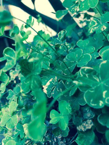 Color Palette Green Leafy