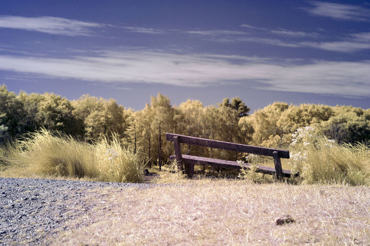 Abstract Abstract Photography Colour Different Perspective Infrared Infrared Photo Infrared Photography Ir Photography Richmond Park, London