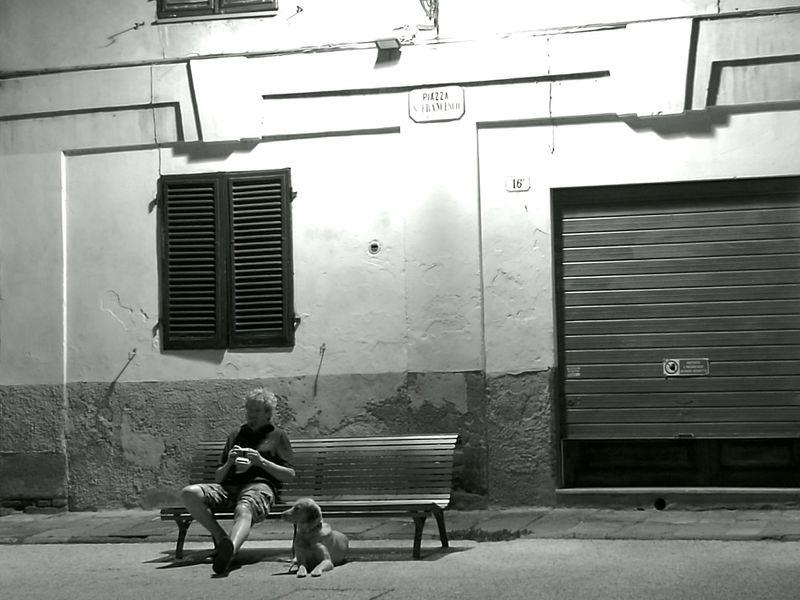 Man Dog Night Photography Waiting...