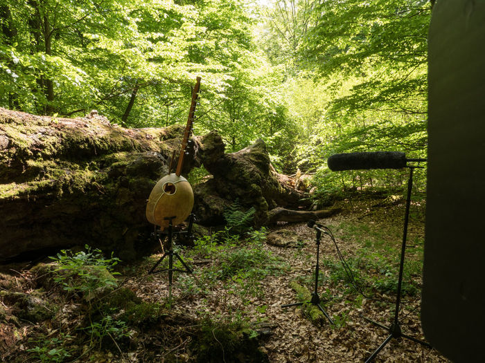 Sababurg-Project with Musician Klaus Latza Ancient Woodland Beauty In Decay Beauty In Nature Day Fallen Tree Kora Microphone Microphone Stand Musical Instrument Nature No People Outdoors Tree Tree Trunk Videoshooting WoodLand Working Hard