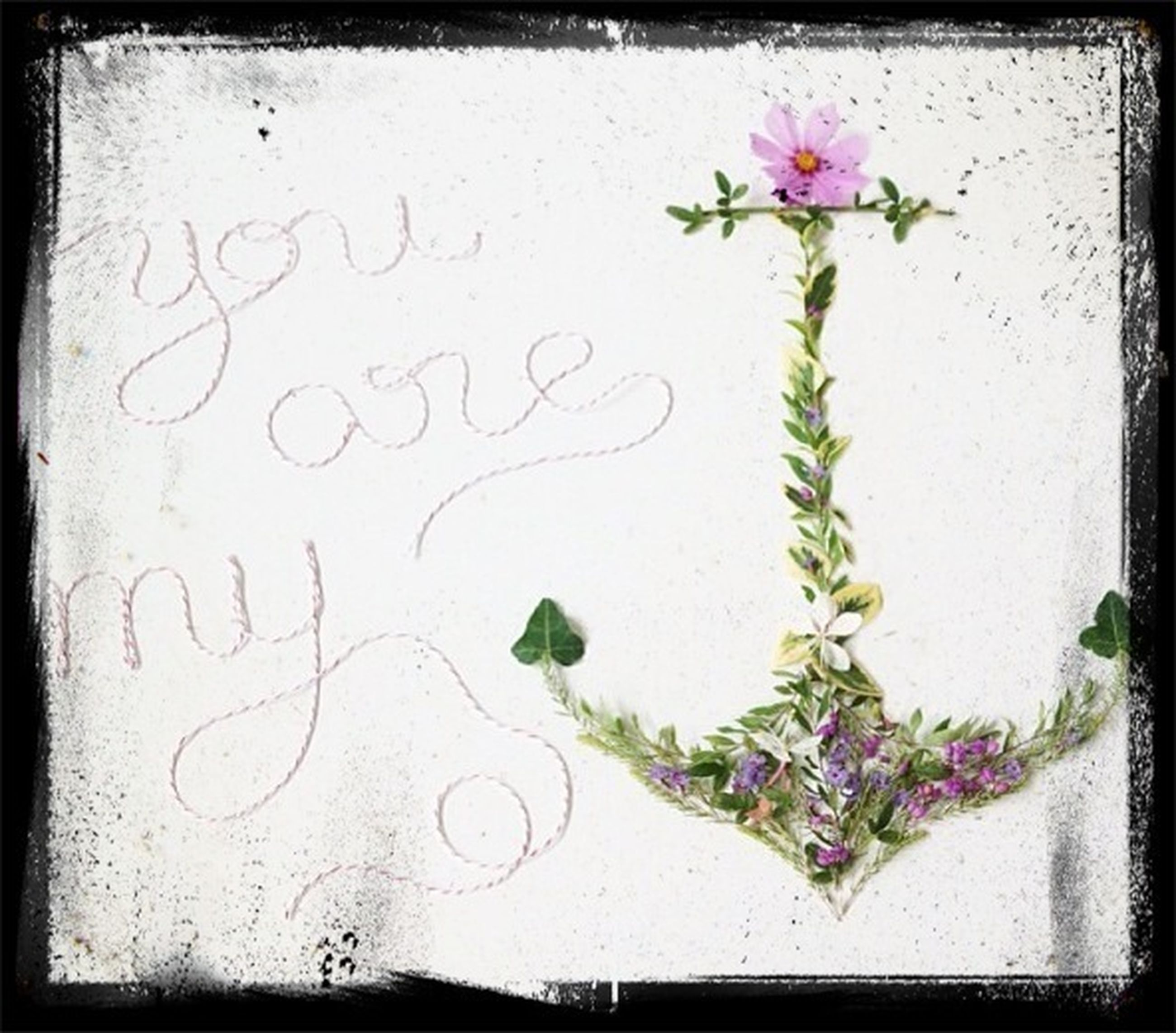 flower, indoors, freshness, text, leaf, close-up, wall - building feature, plant, western script, growth, fragility, table, wall, petal, decoration, paper, pink color, no people, green color, communication