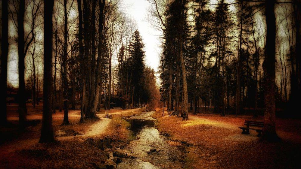 Im wald Woods Wald Bad Feilbach Deutschland Germany The Week Of Eyeem Nature Nature_collection Dario Hello World Cool Dunkelheit Horror Photography Horror