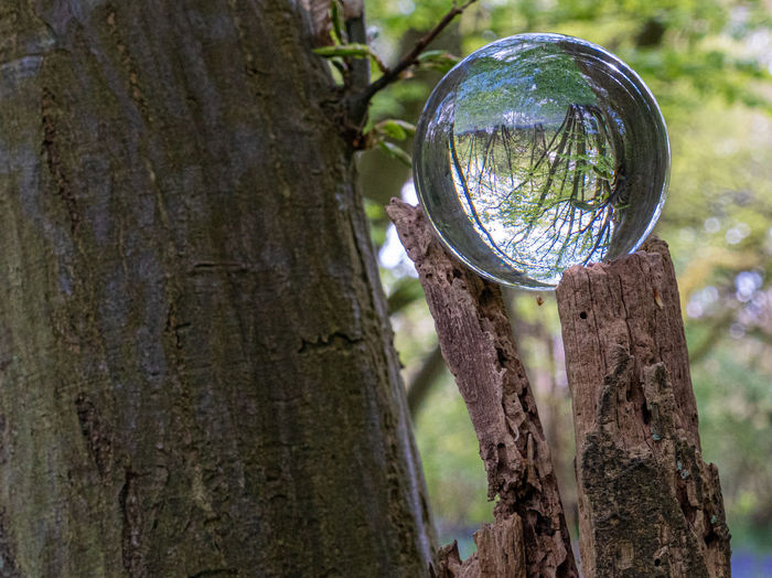 Close-up of crystal ball on tree trunk