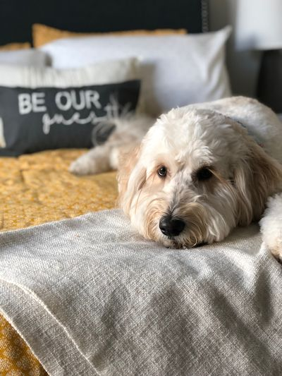 Be our guest EyeEm Selects One Animal Canine Pets Domestic Mammal Dog Domestic Animals Animal Themes Animal Home Interior Relaxation Furniture