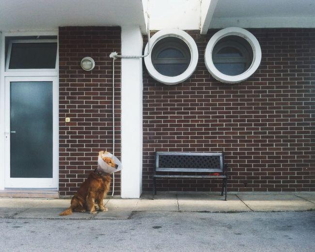 Dog Sitting On Floor Against Building