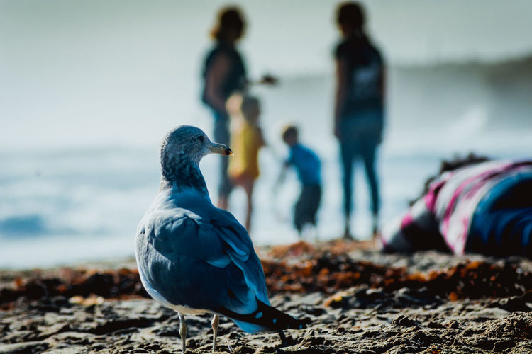 Close-up of seagull at beach
