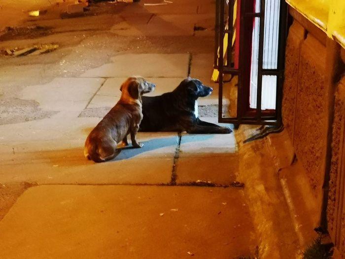 Pets Sitting