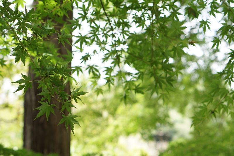 Leaves Plant Green Color Growth Tree Leaf Nature Outdoors Focus On Foreground Freshness Sunlight
