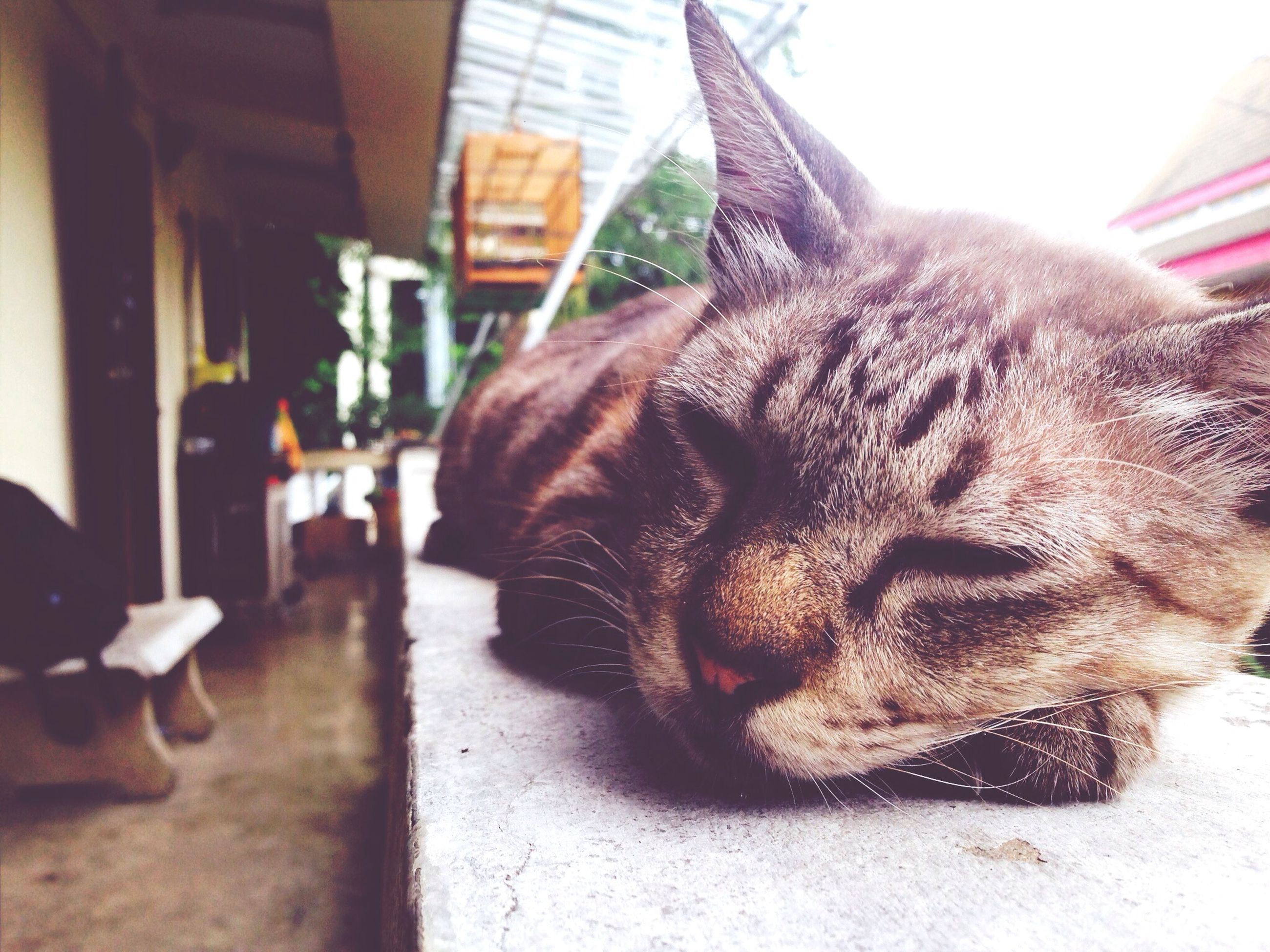 animal themes, domestic animals, mammal, one animal, pets, domestic cat, relaxation, cat, feline, indoors, whisker, sleeping, eyes closed, lying down, close-up, resting, focus on foreground, animal head, home interior, dog