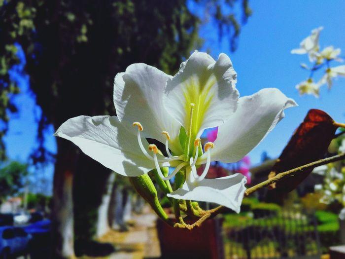 detalle Flower