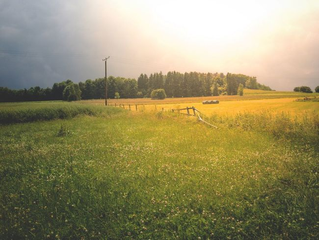 Landcape Field Summer Silage Bales Agriculture Brilon Nature Grass Outdoors Clouds Day Town EyeEmNewHere