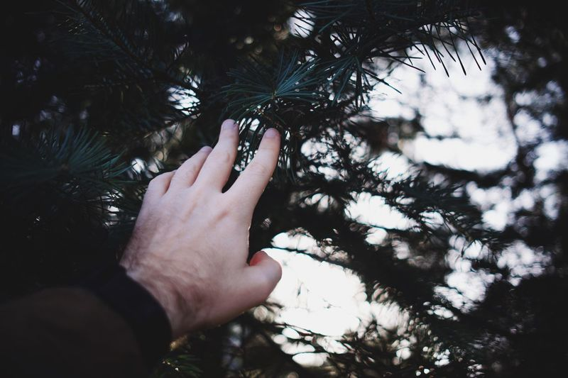 Cropped hand touching tree