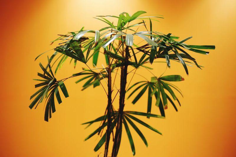 A decor plant