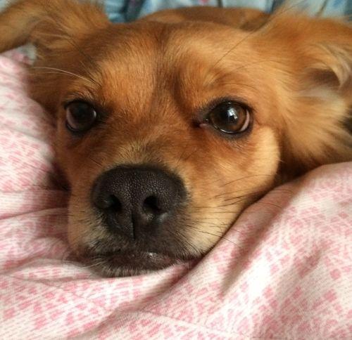 Dog My Dog I Love My Dog My Little Dog <3 Cucciola  Amore ♥️♥️?