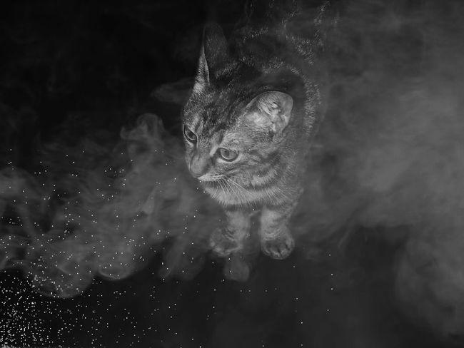 Manipulation Eyem Fotoğrafçılık Hayvanlar Photography Animal Themes Kedicik Adobe Photoshop Cats Izmir Photographer Night Kediler Canon Cat Animal Siyah Beyaz Gri Tonlama Canonphotography Turkey Duman Sis