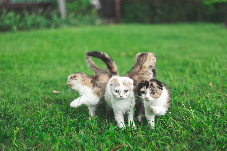 View of kittens on field