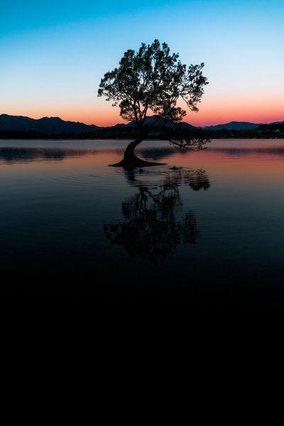 Landscape_Collection Reflection Sunset_collection Tree Wanaka Lake Landscape New Zealand Night Reflection_collection Reflections Reflections In The Water Sunset Wanaka Tree