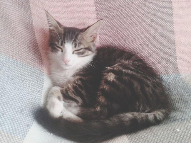 Cute Cat♡ Beutiful  Jake