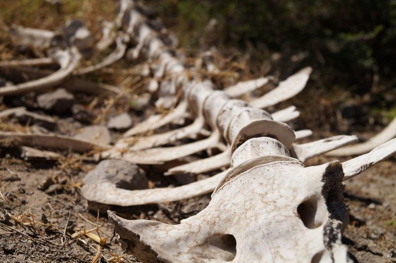 Bones Day Dia