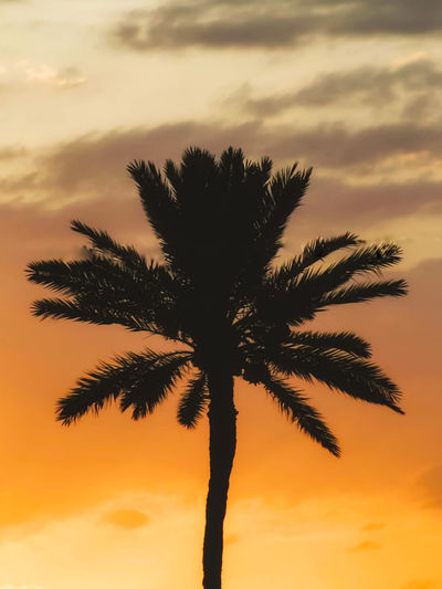 Silhouette palm tree against orange sky