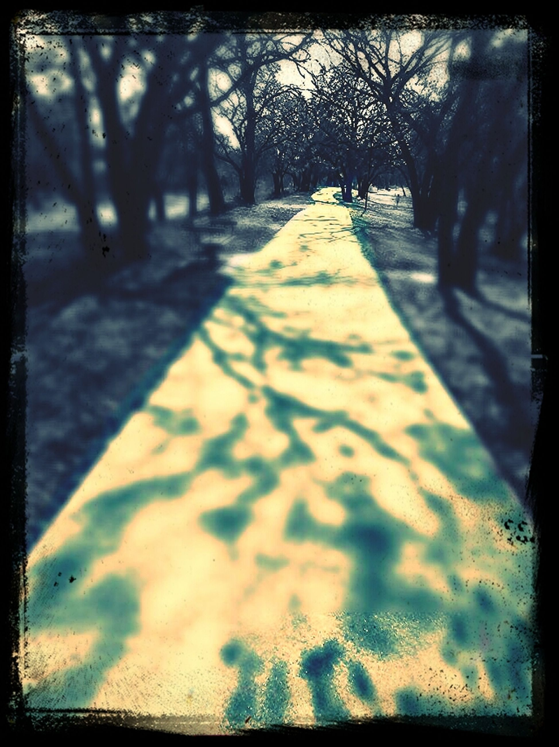 transfer print, tree, auto post production filter, the way forward, shadow, sunlight, tree trunk, road, diminishing perspective, bare tree, day, tranquility, nature, outdoors, street, transportation, no people, vanishing point, tranquil scene, footpath