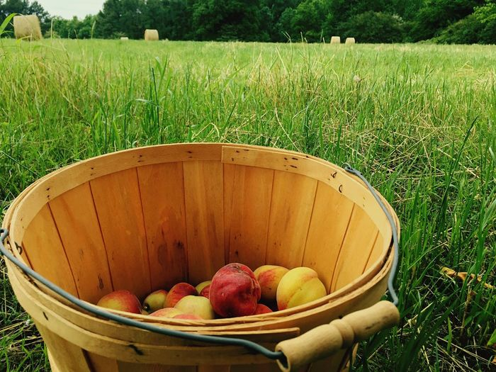 Peaches Hay Bails Green Grass Trees Field Arkansas The American Way Nashville, Arkansas Country Living Country Home Grown Peaches For Days Food