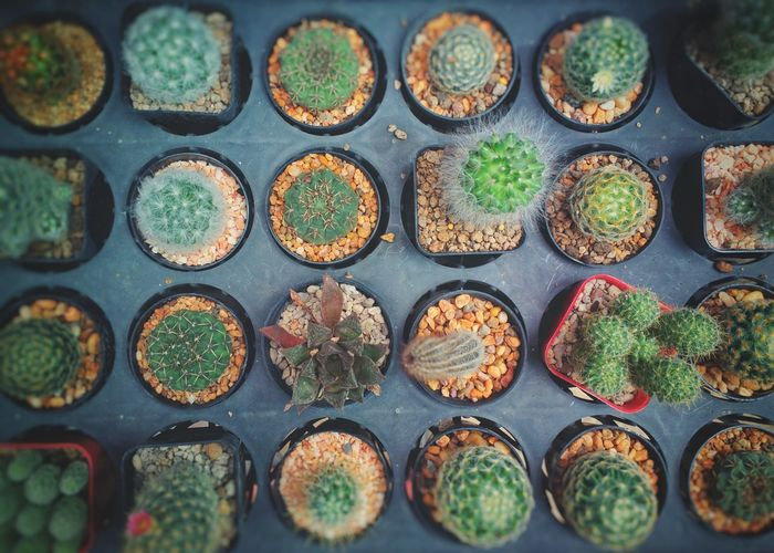 Full frame shot of small potted plants