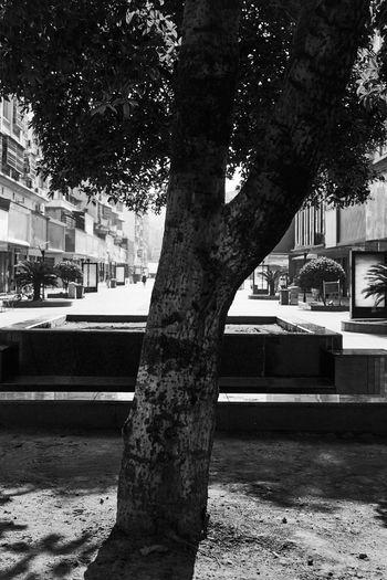 Street by tree in city