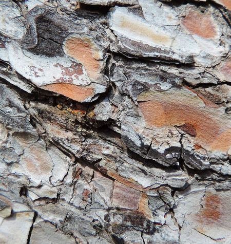 Bark Background Background Texture Backgrounds Bark Bark Texture Bark Texture Background Barks Of A Tree Close-up Day Full Frame Natural Pattern Nature No People Outdoors Pattern Pine Bark Plant Plant Bark Rough Textured  Tree Tree Trunk Trunk Wood - Material