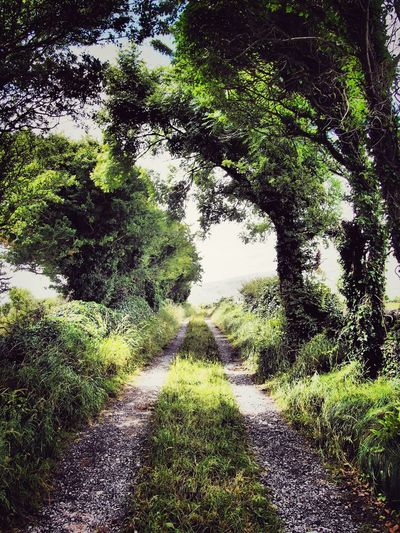 Bealaclugga, starting out County Clare Ireland The Burren Lane Bohereen Outdoors Hike Leading Lines Green Trees Lush Foliage Green Leaves Starting Out Landscapes