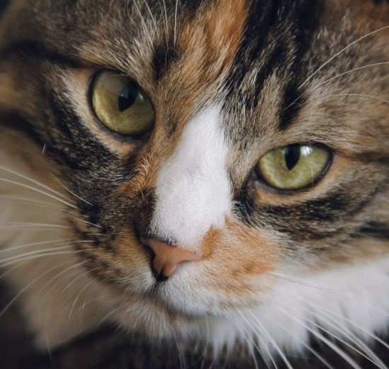 mycat 🙃 Pets
