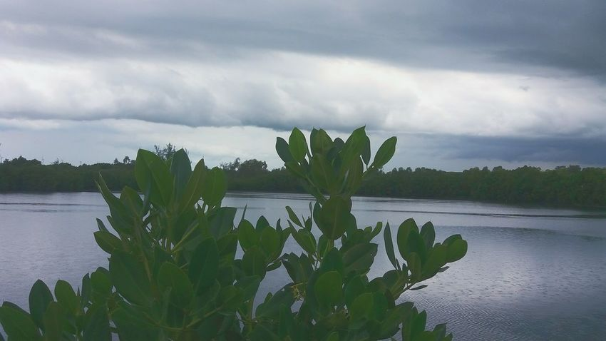 Nature Photography Nature Trees Sea And Sky Taking Photos Relaxing Clouds And Sky View Enjoying Life